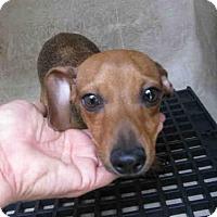 Adopt A Pet :: FRIEDA - San Antonio, TX