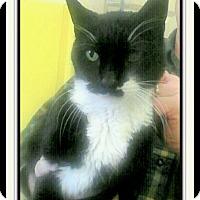 Adopt A Pet :: Charlie - Trevose, PA