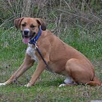 Adopt A Pet :: Remi - Lebanon, MO