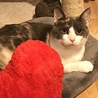 Adopt A Pet :: Inigo - Akron, OH