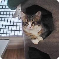 Adopt A Pet :: Scarlett - Richmond, VA