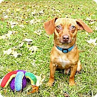 Adopt A Pet :: Pan = FUN! - Mocksville, NC