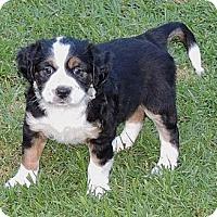 Adopt A Pet :: Kellee - La Habra Heights, CA