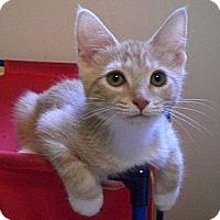 Adopt A Pet :: Lannister - Byron Center, MI