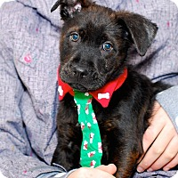 Adopt A Pet :: Tony - Randolph, NJ
