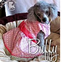 Adopt A Pet :: Buffy - Essex Junction, VT