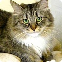 Adopt A Pet :: Sasha - Davis, CA