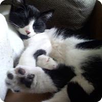 Adopt A Pet :: Sallet - North Highlands, CA
