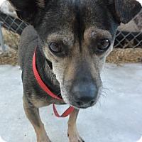 Adopt A Pet :: Jack - Meridian, ID