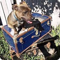 Adopt A Pet :: Floki - Murrieta, CA