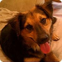 Adopt A Pet :: Libby - Miami, FL