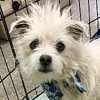 Adopt A Pet :: Vincent - Lancaster, CA