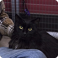 Adopt A Pet :: Sir Edward - Winchendon, MA
