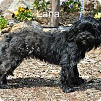 Adopt A Pet :: Lana - Yreka, CA