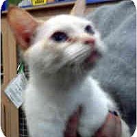 Adopt A Pet :: Faelan - Jacksonville, FL