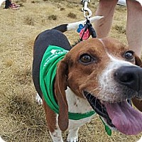 Adopt A Pet :: Earl - Indianapolis, IN