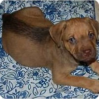 Adopt A Pet :: Reese - Minneola, FL