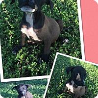 Adopt A Pet :: Eden - Scottsdale, AZ