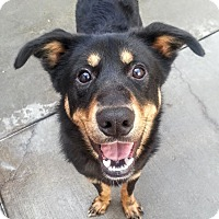 Adopt A Pet :: Larry*ADOPTED!* - Chicago, IL
