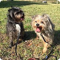 Adopt A Pet :: KOKO & DIESEL - DeLand, FL