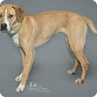 Adopt A Pet :: Jina - Waynesboro, PA