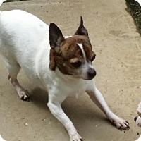 Adopt A Pet :: Ophelia - Beverly Hills, CA