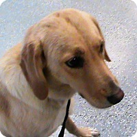 Adopt A Pet :: Christy - Maynardville, TN