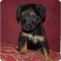 Adopt A Pet :: Angel - Chula Vista, CA