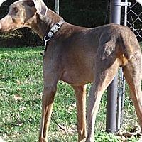 Adopt A Pet :: JOHNNI - ROCKMART, GA
