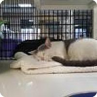 Adopt A Pet :: Minuet - La Grange Park, IL