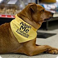 Adopt A Pet :: Pilgrim - Mebane, NC