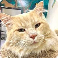 Adopt A Pet :: Big Foot - Davis, CA