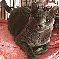 Adopt A Pet :: Jada - Oakland, CA