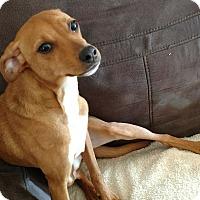 Adopt A Pet :: Hamachi - Savannah, GA
