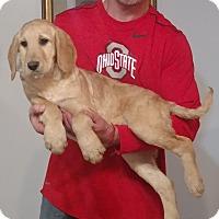 Adopt A Pet :: Duke - South Euclid, OH