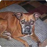 Adopt A Pet :: Klowee - Albany, GA