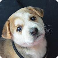 Adopt A Pet :: Jennifer Grey - Plano, TX