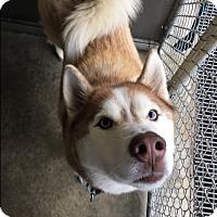 Adopt A Pet :: Mickey - Brick, NJ