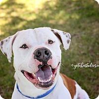 Adopt A Pet :: URGENT - Rascal - Caledon, ON