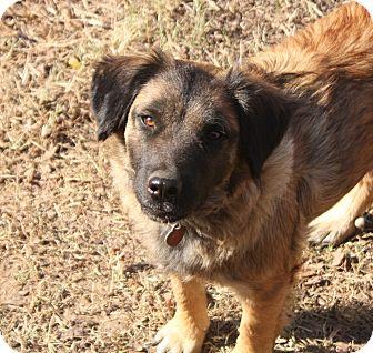 Shepherd (Unknown Type)/Terrier (Unknown Type, Medium) Mix Dog for adoption in Pulaski, Tennessee - Lizzie