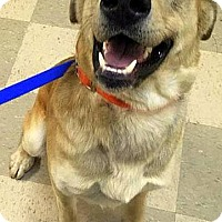 Adopt A Pet :: Ruger - Libby, MT