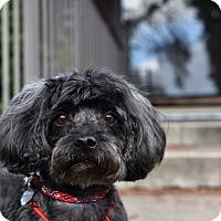 Adopt A Pet :: Liam - San Diego, CA