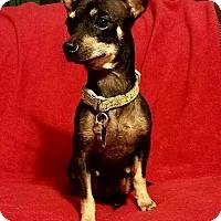 Adopt A Pet :: Kanga - Danbury, CT