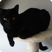 Adopt A Pet :: Mamba - Springfield, OR