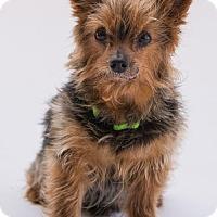 Adopt A Pet :: Dollar - Atlanta, GA