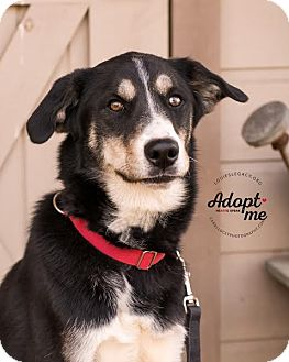 German Shepherd Dog/Siberian Husky Mix Dog for adoption in Cincinnati, Ohio - Quarter - SPONSORED