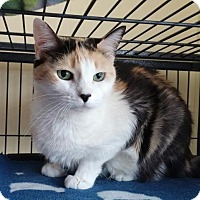 Adopt A Pet :: Callie - Templeton, MA
