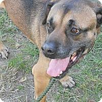Adopt A Pet :: William - Camden, SC