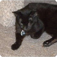 Adopt A Pet :: Raven - Cleveland, OH