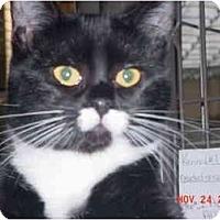 Adopt A Pet :: Thumbalina - Pendleton, OR
